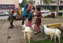 AUDIO Neobični putnik u društvu magarca, psa i desetak ovaca i koza u potrazi za mirom na putu prema Siriji prošao kroz Čapljinu